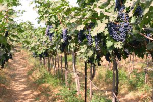 wine tasting bangalore, wine tasting, things to do in bangalore